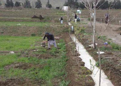 raesf-plantation-badam-bagh-afghanistan