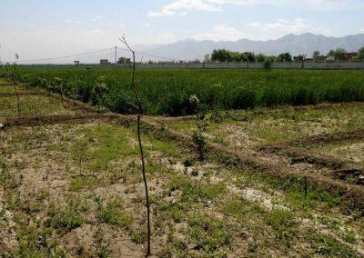 raesf-plantation-haies-diversifies-afghanistan