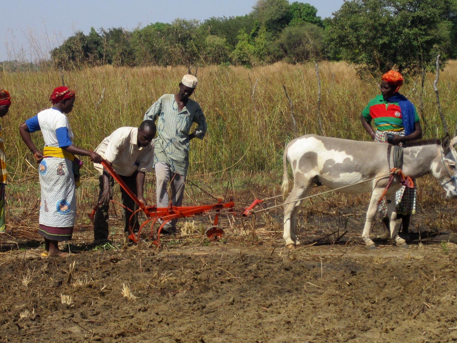 charrue agroécologie