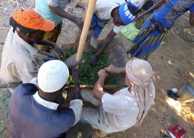 raesf-preparation-traitement-feuilles-neem