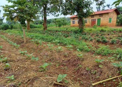 Photo d'amarantes, aubergines et bâtiment de la ferme
